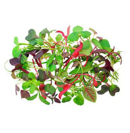 Picture of Micro herbs - 30g
