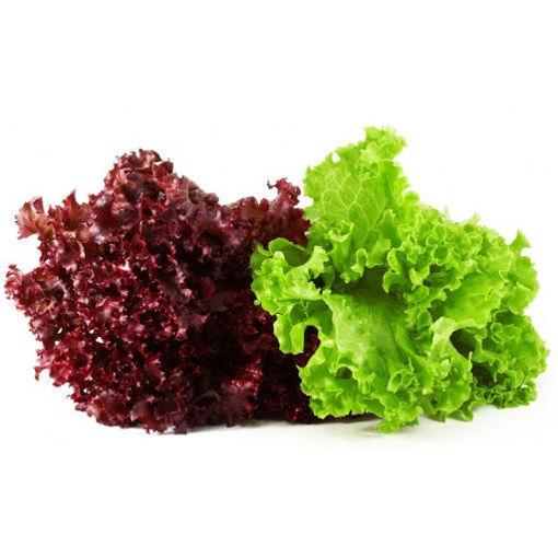 Picture of Fancy Lettuce - (1 kg)