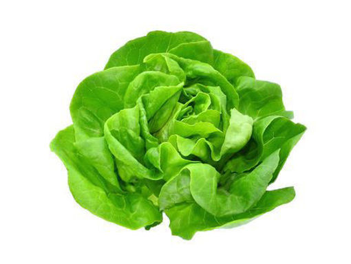 Picture of Butter Lettuce - Head - 2 for R25