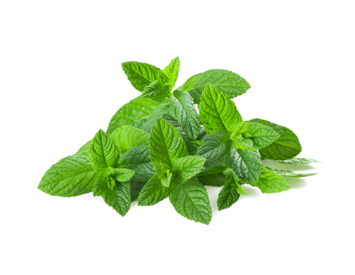 Picture of Fresh Herbs Combo - Any 3 for R20