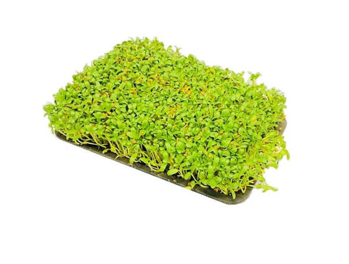 Picture of Fenugreek / Methi - Per Tray