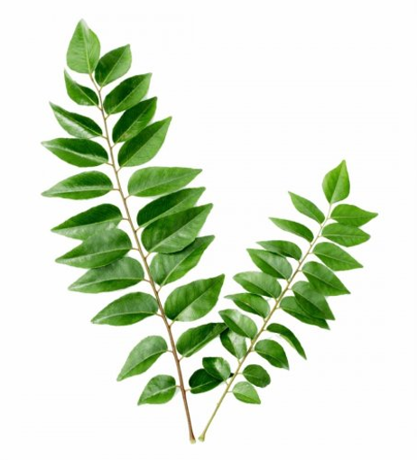 Picture of Curry Leaf - 100g