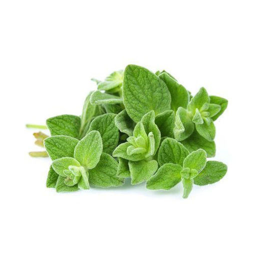 Picture of Oregano - 100g