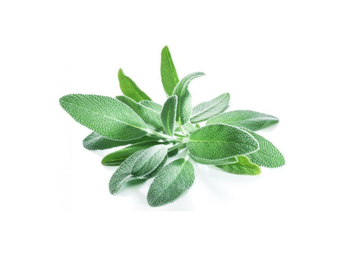 Picture of Sage - 100g