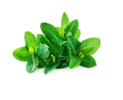 Picture of Fresh Mint 100g - Buy 1 Get 1 Free