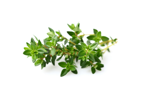 Picture of Thyme - Per kg